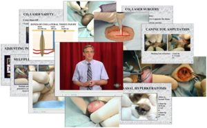 veterinary laser online course