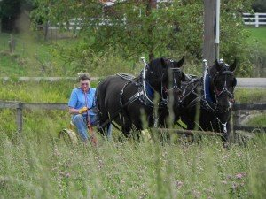 Dr. Edwards Enjoys Farming With Horse Drawn Machinery