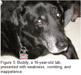 Figure 5 - Buddy, Lab, Weakness, vomiting