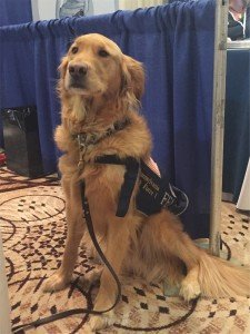 02_Penn Vet Conference 2015 - Search and rescue dog in the exhibit hall