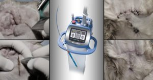 laser ablate canine vertical ear canal