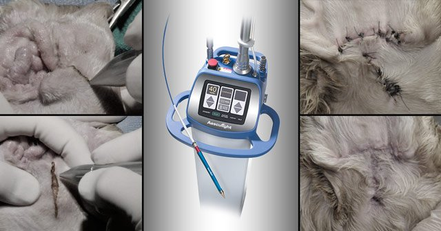 How to ablate canine vertical ear canal with CO<sub>2</sub> laser