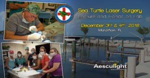 sea turtle lecture and lab v3