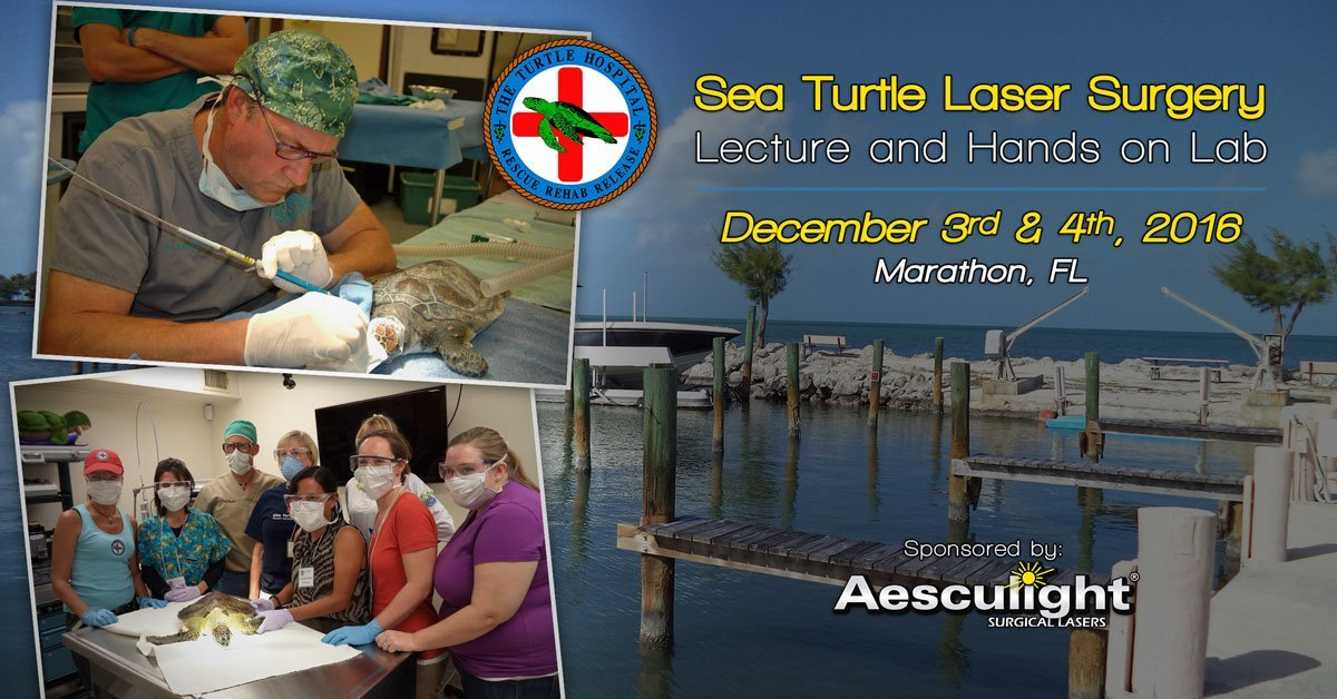The Turtle Hospital Sea Turtle Laser Surgery Lecture & Lab – Dec 3-4