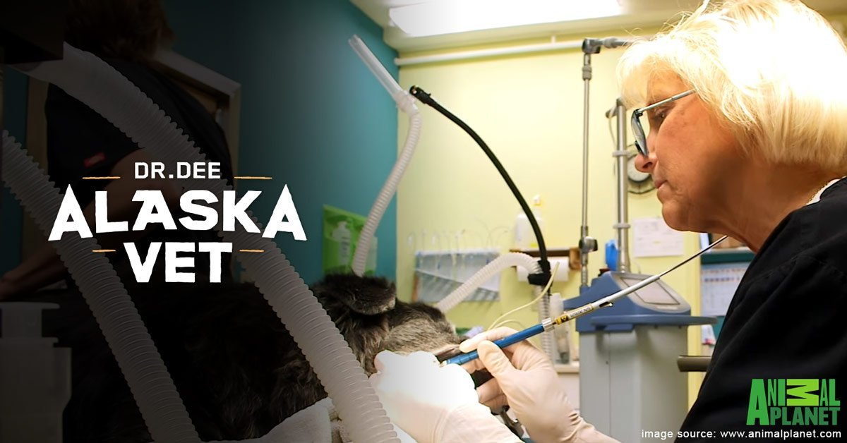 "VIDEO – Aesculight Lasers Featured on ""Dr. Dee: Alaska Vet"" TV Show"