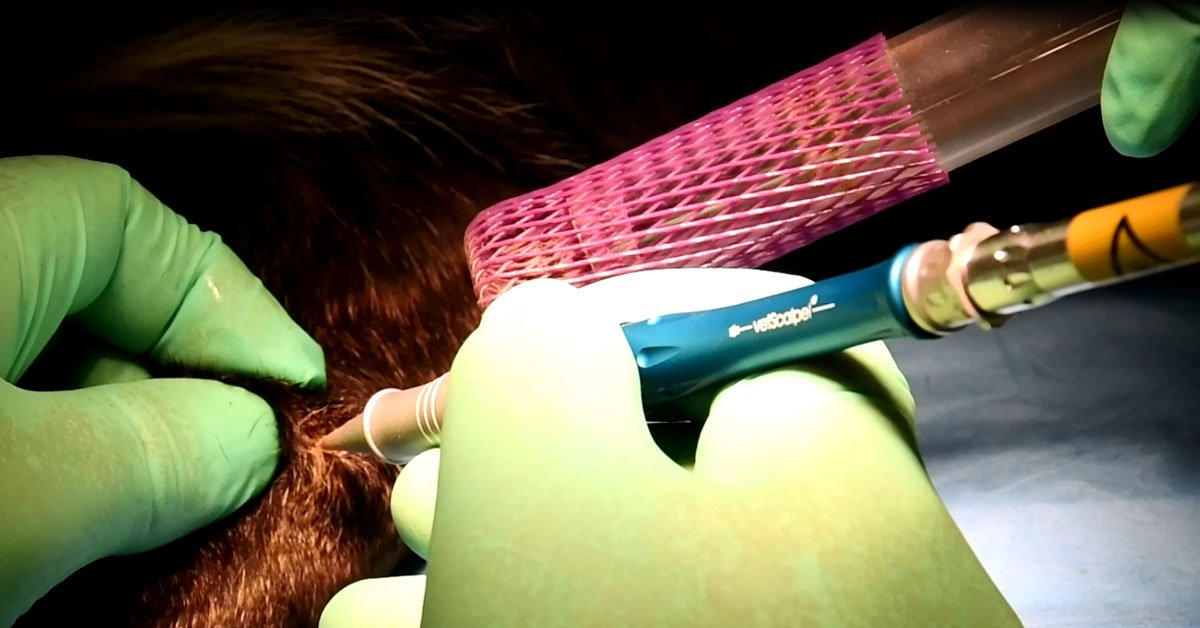 vetscalpel co2 laser growth removal veterinary dermatology