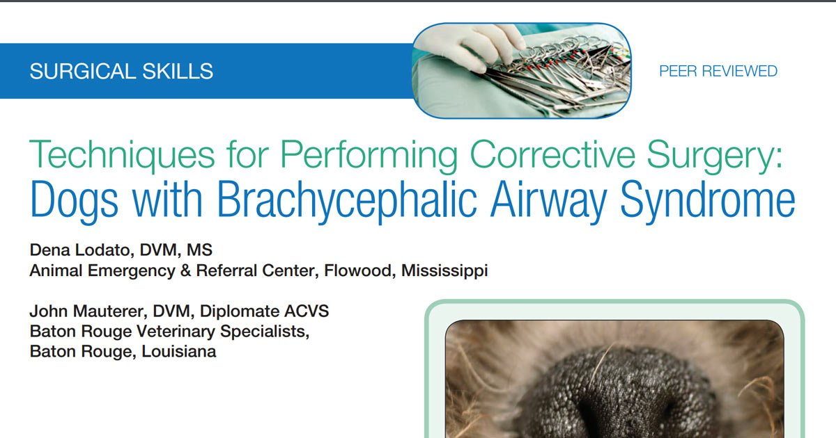 Corrective Surgery Dogs with Brachycephalic Airway Syndrome