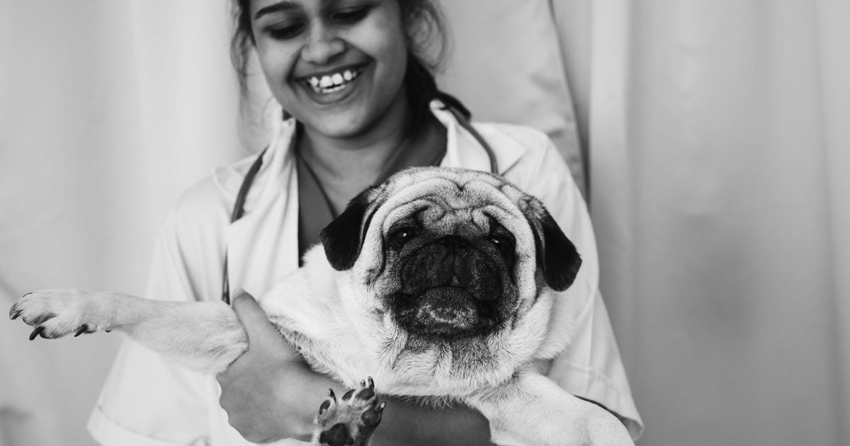 pug boas laser surgery review
