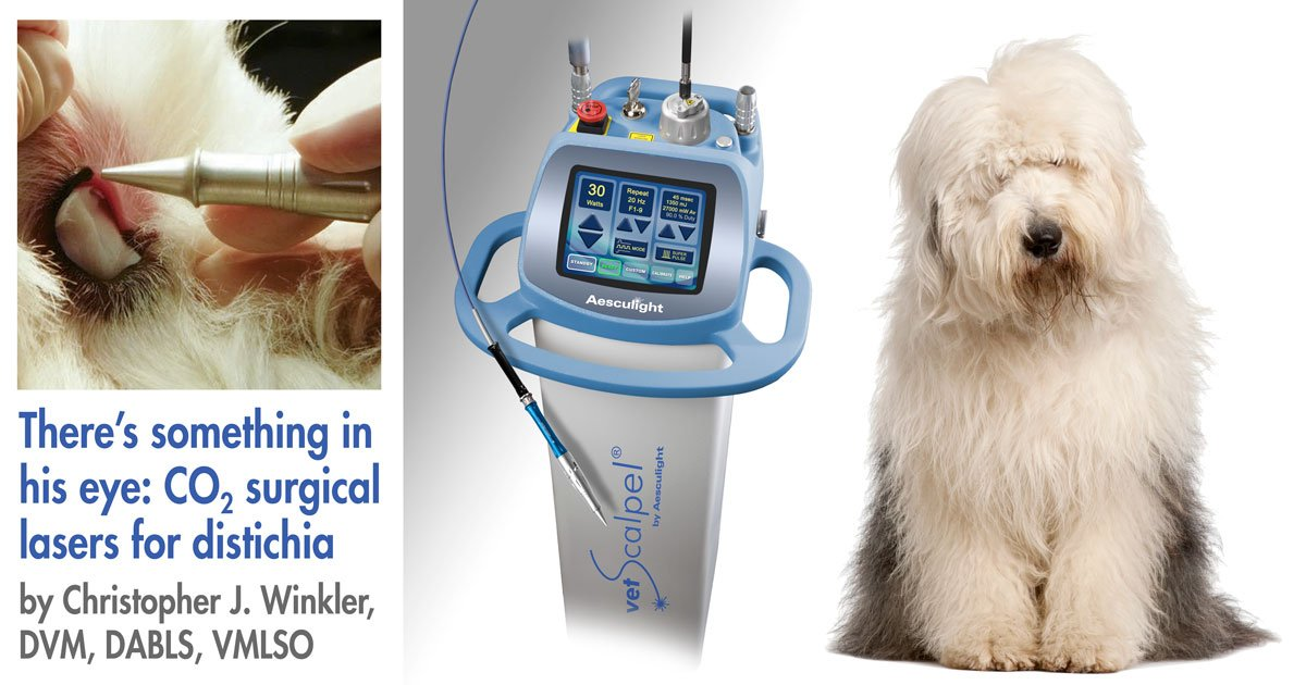 laser distichia dog surgery