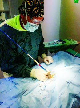 laser coeliotomy and enterotomy monitor lizard 04a incision