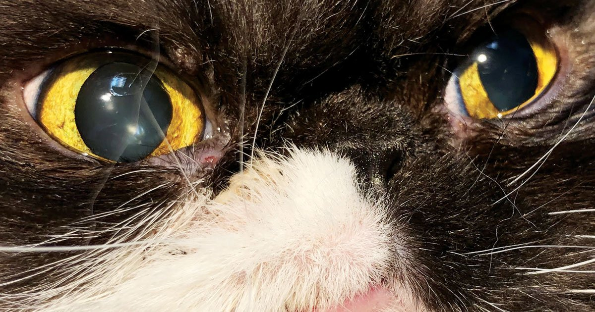 cat eye lid tumors co2 laser surgery